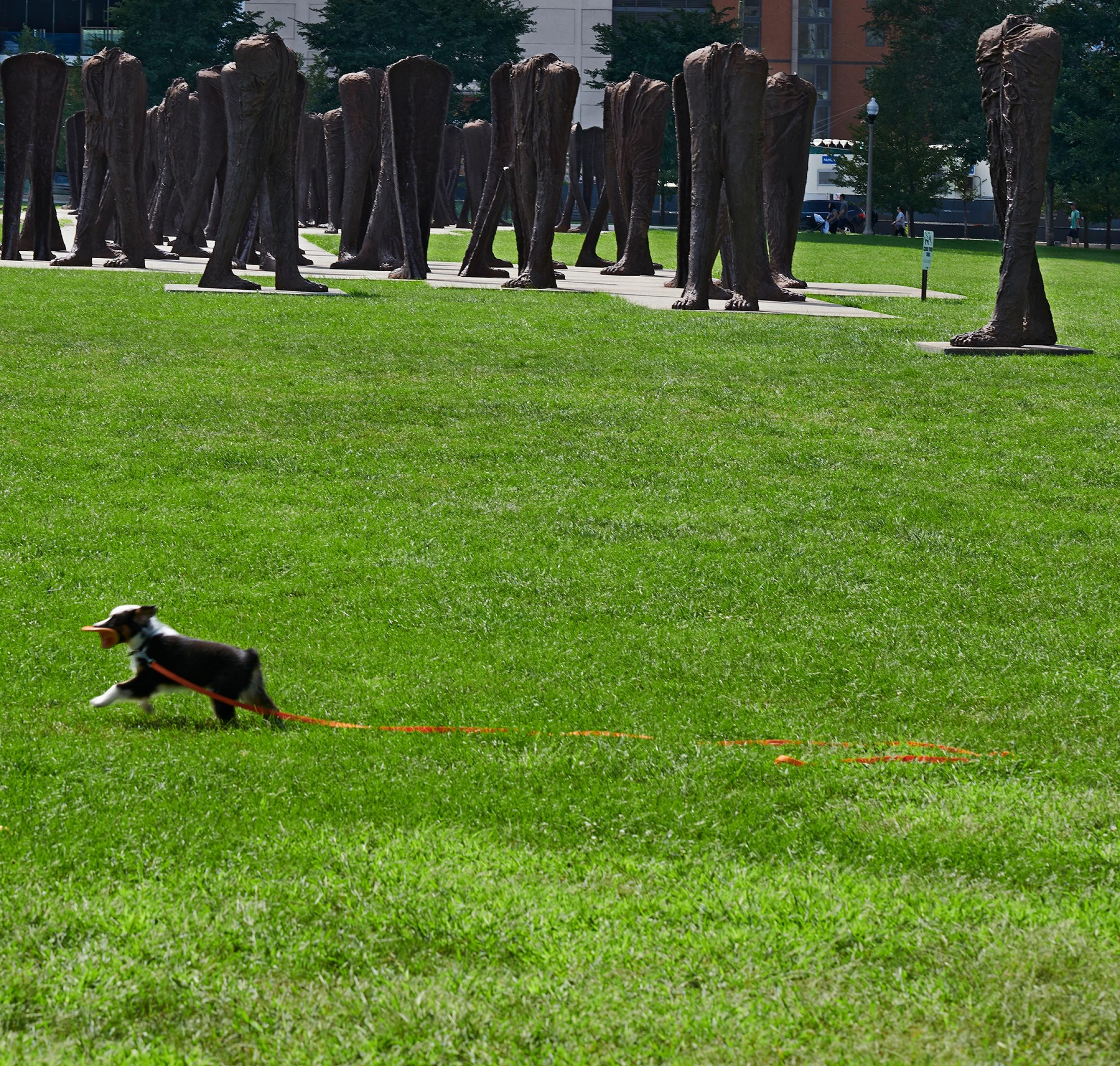 Grant Park Dog Runs